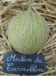 Article sur le melon de Cavaillon
