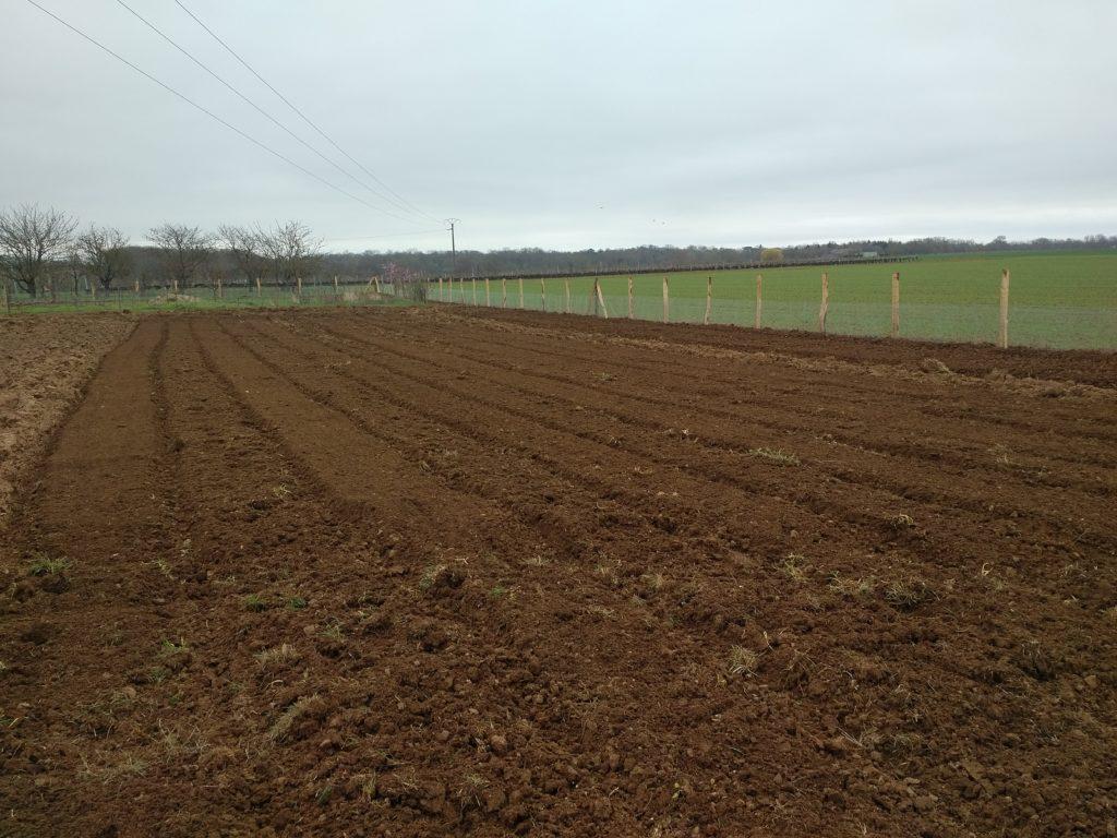 La prairie se transforme en potager le jardin d 39 essai de - Le fumier de cheval est il bon pour le jardin ...