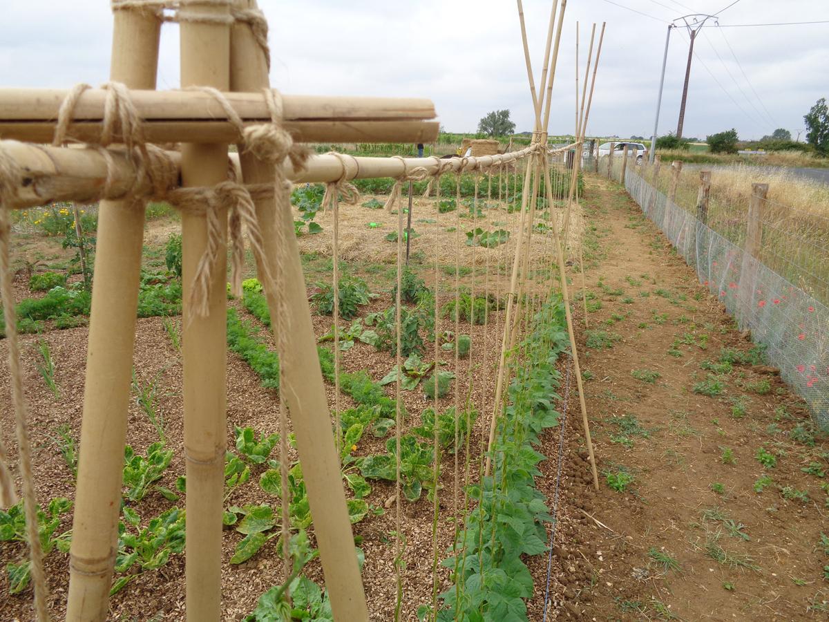 Comment Faire Pousser Bambou structures et autres tipis : et si on faisait grimper tout