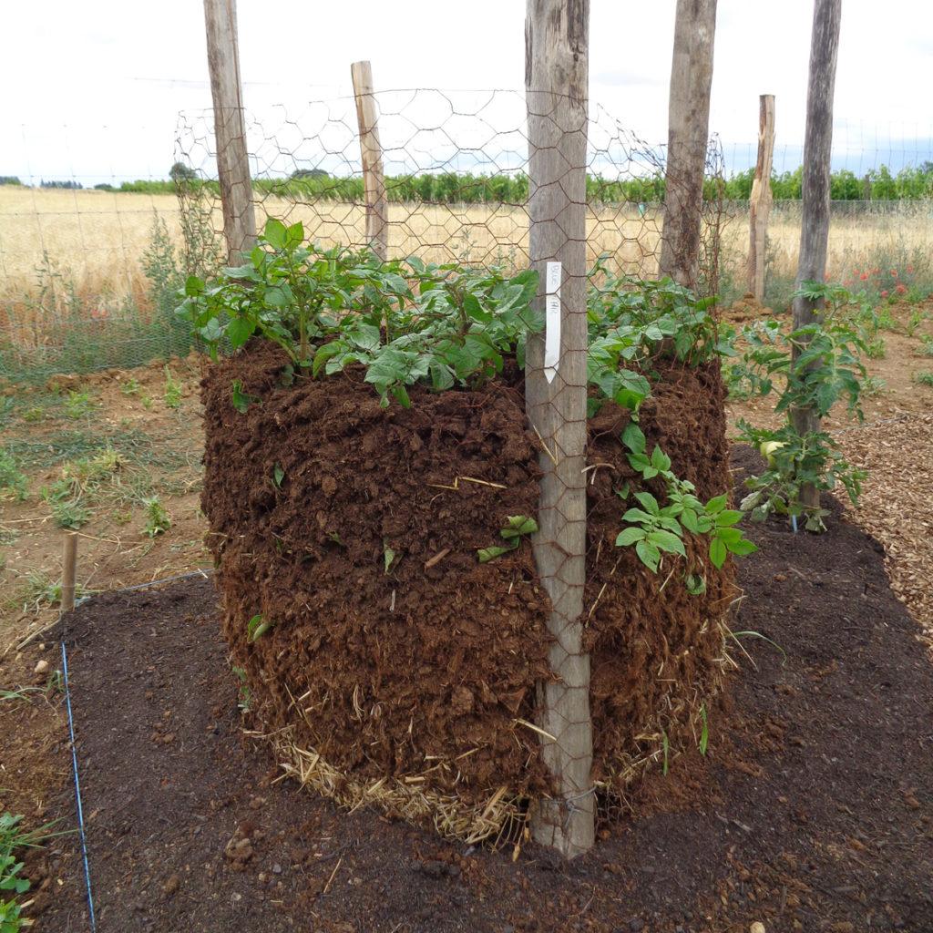 retour sur les essais de culture de pommes de terre jardin d 39 essai. Black Bedroom Furniture Sets. Home Design Ideas