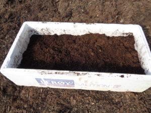plantation de choux en terrine