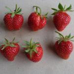 fraise Charlotte