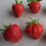 fraise Maestro