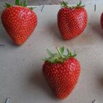 fraise Osiris