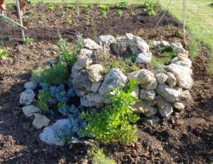tour à aromatiques en végétation