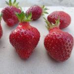 fraise Rubis des Jardins