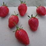 fraise Mamie