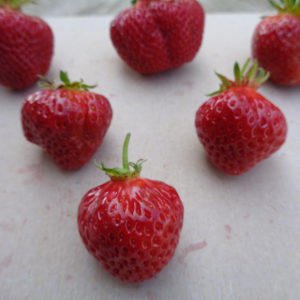 fraise Manille