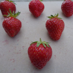 fraise Anabelle