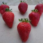 fraise Sweet Ann