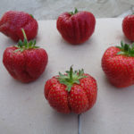 fraise Sonata