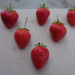 fraise Favori