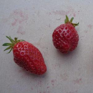 fraise Cirafine