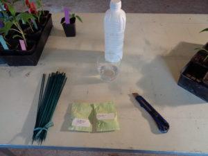 greffage : préparatifs