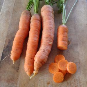 carottes prêtes à manger