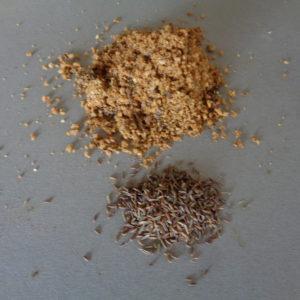 sable+graines de cerfeuil tubéreux