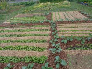 mélange de légumes sur une même planche