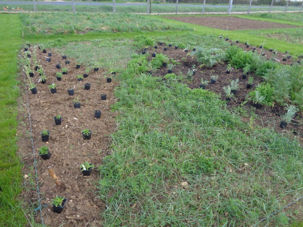 Un plan de jardin pour mieux se projeter