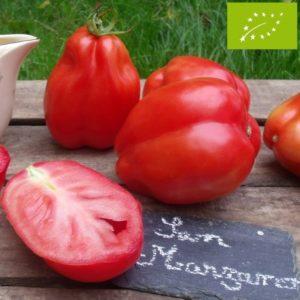 Tomate San Marzano Bio