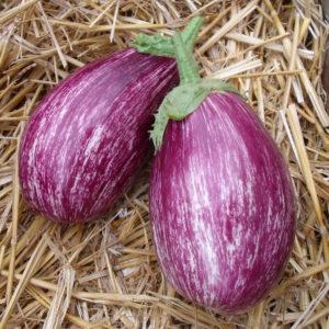 aubergine tsakoniki