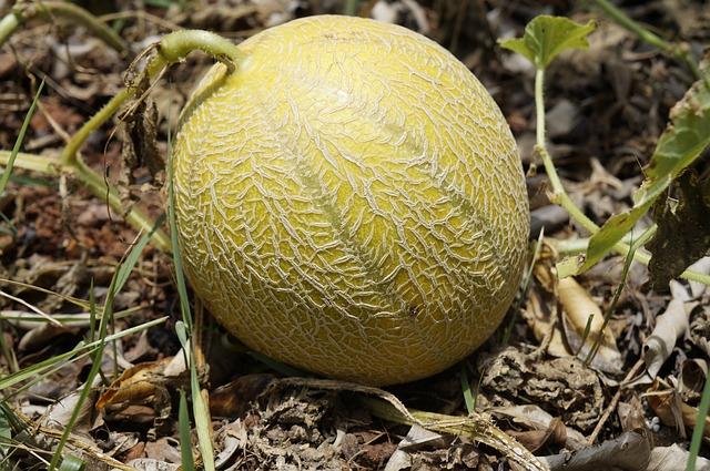 peau de melon brodé