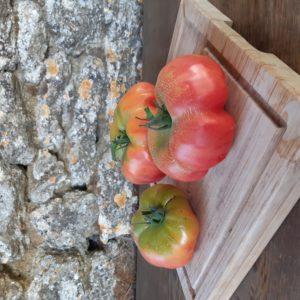 tomate espagnol montserrat