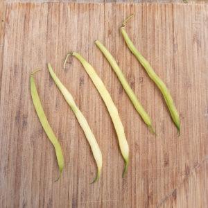 Les haricots beurre