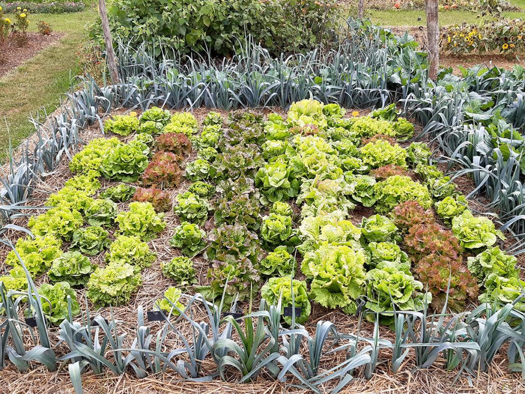 Salades test Sativa