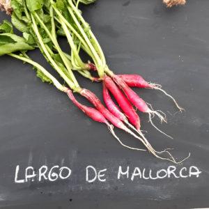 Largo de Mallorca