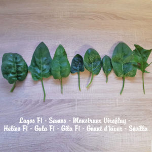 8 variétés d'épinards