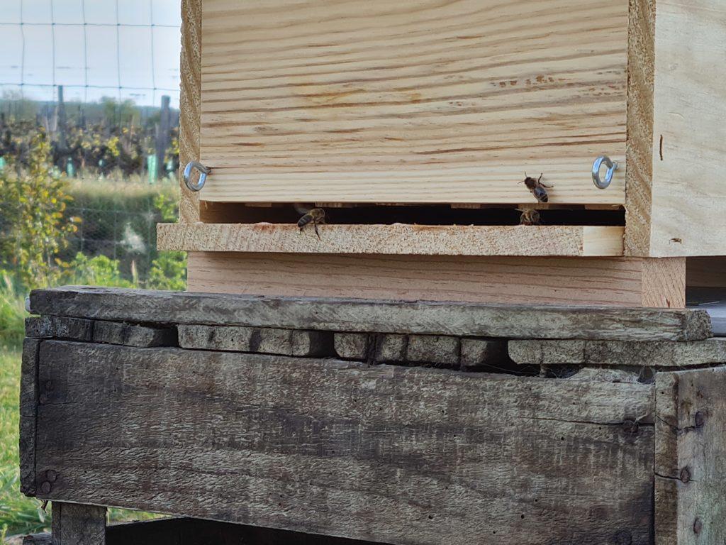 les abeilles visitent