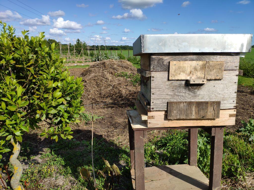 ruche d'abeilles remplie !